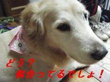ポメ3(小)