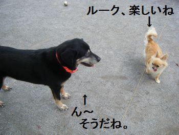 2_20080708200151.jpg