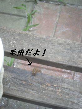 3_20080619211024.jpg