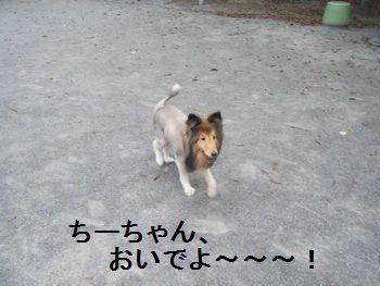 5_20080708200231.jpg