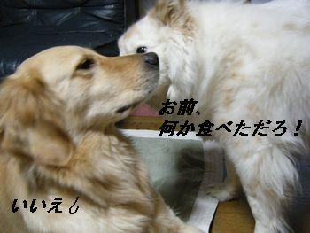 6_20080619211056.jpg