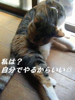 6_20080701194318.jpg