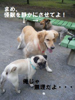 8_20080708201033.jpg
