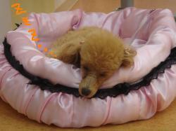 ロミ 寝る