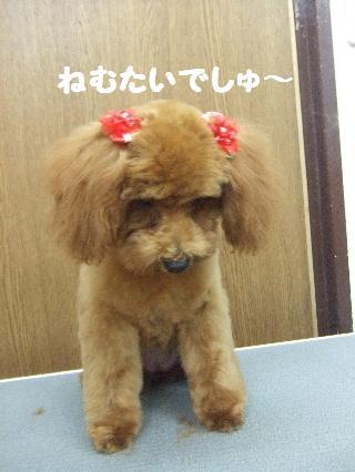2008_0707ふみえ0022