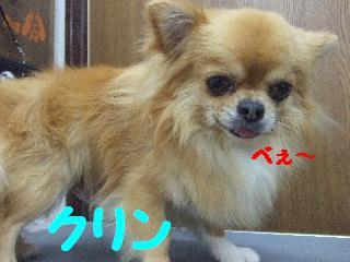 2008_0707ふみえ0045