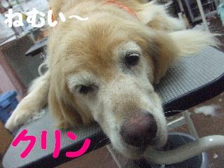 2008_0707ふみえ0043