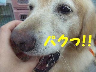 2008_0707ふみえ0053