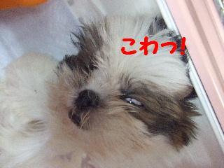 2008_0707ふみえ0005