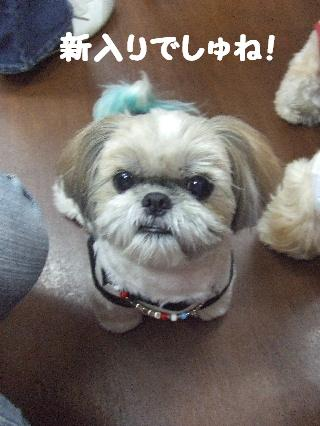 2008_0707ふみえ0060