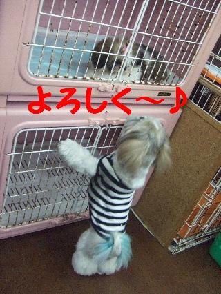 2008_0707ふみえ0065