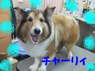 2008_03220037.jpg