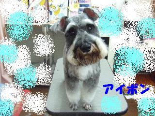 2008_04070003.jpg