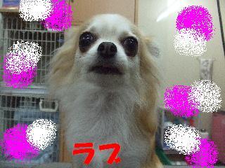 2008_04070006.jpg