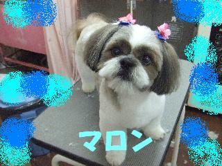 2008_04110010.jpg