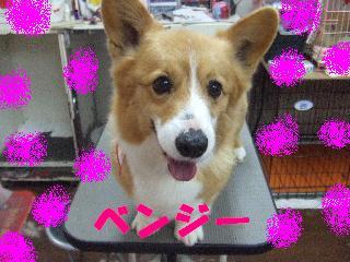2008_04140010.jpg