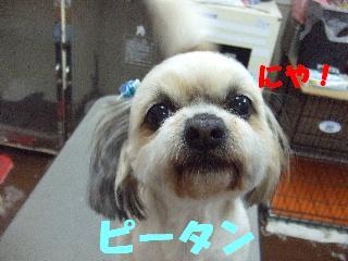 2008_04140015.jpg