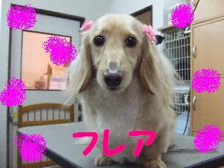 2008_04190018.jpg