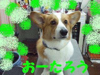 2008_04190022.jpg