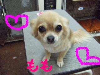 2008_04190024.jpg