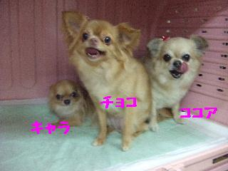 2008_04190034.jpg