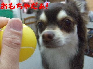 2008_04260048.jpg
