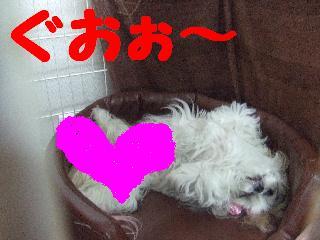 2008_04260074.jpg