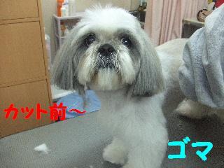 2008_04290043.jpg