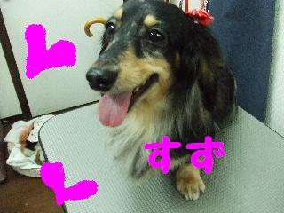 2008_05060012.jpg