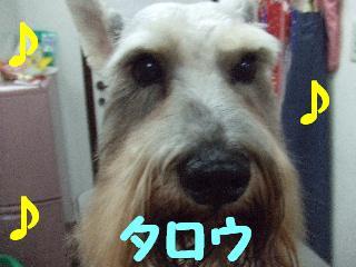 2008_05060024.jpg