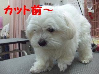 2008_05060048.jpg