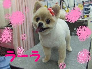 2008_05060062.jpg
