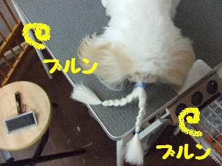 2008_05100023.jpg