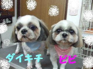 2008_05100027.jpg