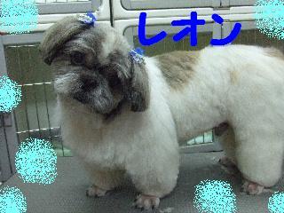 2008_05130021.jpg