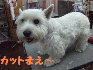 2008_05170023.jpg