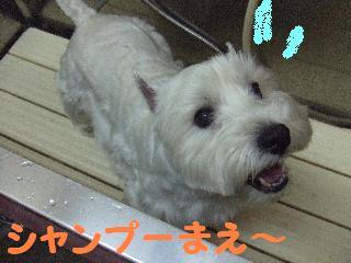 2008_05170028.jpg