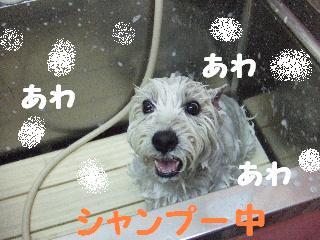 2008_05170031.jpg