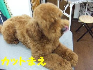2008_05170034.jpg