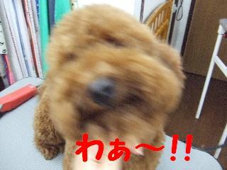 2008_05170036.jpg