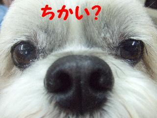 2008_05250085.jpg