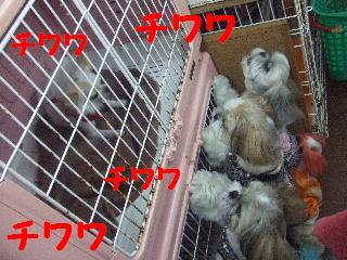 2008_05250104.jpg