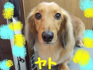 2008_05280007.jpg