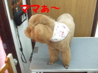 2008_06010046.jpg