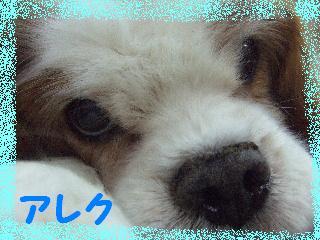 2008_06010061.jpg