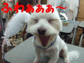 2008_06010072.jpg