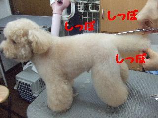 2008_06040021.jpg