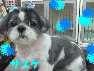2008_06040050.jpg