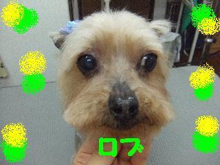 2008_06040052.jpg