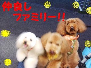 2008_06040074.jpg